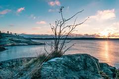Sunrise in Sweden (davidshred) Tags: sunrise d3300 lightroom sweden sverige landskap soluppgng stockholm cloud ocean sea star birds swan water light paradise