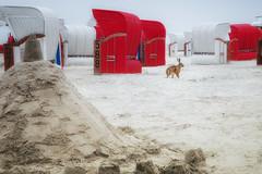 Beach Bunny (GeorgKazrath) Tags: bunny nikon nikond300 afs60mm 60mm summer sommer strand beach animal tiere hasen