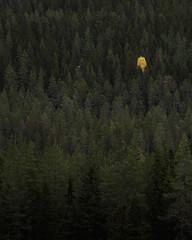 Sdra Garberg IV (Gustaf_E) Tags: birch bjrk dalarna ensam forest gran gul hst kvll landscape landskap lonely pine pines skog spruce svartsen sverige sweden sdragarberg tall woods yellow