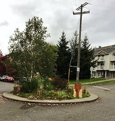 A traffic circle at Hiawatha and Charles St (Seattle Department of Transportation) Tags: hiawatha charles st seattle sdot transportation traffic circle flowers calming community greenway neighborhood donghochang south rainier judkins
