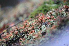 Moss on the roof (Maja Ajala S.) Tags: summer sommer moos moss roof house hausdach dach nature