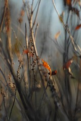 last hurrah (courtney065) Tags: nikond200 nature autumn fall meadow flora foliage depthoffield field branches abstract