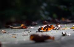 Herbst beginnt.  Autumn leaves (drummerwinger) Tags: rot herbst sigma canon700d bltter wald bank stimmung