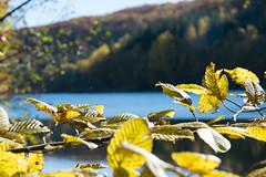 DSC_0244 (Pter_Szab) Tags: mtra matra hungary nature autumn colours mountains galyateto galyatet forest hiking nationalpark landscape