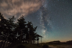 'A Forest Of Stars' - Newborough, Anglesey (Kristofer Williams) Tags: night sky stars astro astrophotography forest trees newborough anglesey milkyway landscape nightscape