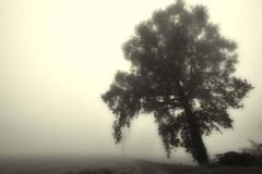 l'albero e la nebbia (mat56.) Tags: paesaggi landscapes landscape paesaggio monocromo monochrome albero tree nebbia fog misty sancolombanoallambro milano lombardia pianura padana campagna panorama antonio romei mat56 atmosfera atmosphere