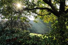 sunny moments (Evan_1980) Tags: sonne sonnenstrahlen herbst gegenlicht hdr f95 braunschweig