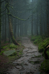 The Path through the Mist (G_Howold) Tags: mist nebel wald mood forest stimmung colour schwarzwald blackforest trees path weg bäume moos stones steine kalt spooky canon 20d germany travel hiking nature natur wandern natureandnothingelse bestcapturesaoi