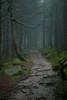The Path through the Mist (G_Howold) Tags: mist nebel wald mood forest stimmung colour schwarzwald blackforest trees path weg bäume moos stones steine kalt spooky canon 20d germany travel hiking nature natur wandern natureandnothingelse bestcapturesaoi