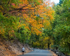 Henry Hudson Drive, Palisades Interstate Park, Fort Lee, New Jersey (jag9889) Tags: autumn usa bergencounty foliage runner newjersey henryhudsondrive palisadesinterstatepark fortlee outdoor 2016 road jag9889 20161024 07024 colors fall gardenstate landscape nj newjerseysection pip palisades park unitedstates unitedstatesofamerica zip07024 englewoodcliffs us