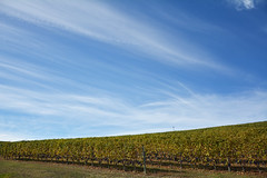 Linee di nuvole e vigneti - Lines of clouds and vineyards. (sinetempore) Tags: paesaggio landscape langhe barolo vigneti vineyards vino wine colline hills cielo sky nuvole clouds piemonte piedmont lineedinuvoleevigneti linesofcloudsandvineyards uva grapes