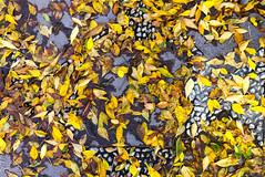 Impresion de otoño (Micheo) Tags: otoño autumn yellow naranja suelo floor empedrado