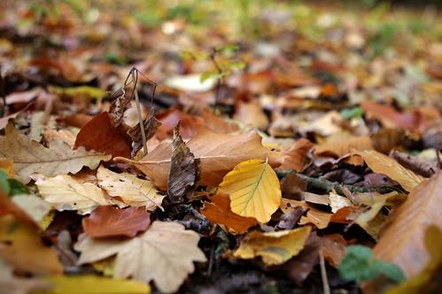 Autumn in Helsingborg 5