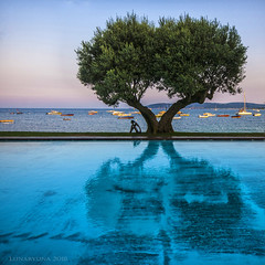 Bay of St. Tropez from a tree's perspective - HTT! (lunaryuna) Tags: france cotedazur mediterranean sttropez bayofsttropez ramatuelle summer season olivetree pool reflection sea boats dusk mood lunaryuna coast frenchriviera seasonalbeauty sqaureformat reflections infinitypool treemendoustuesday