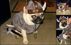 Ridley, the Viking... (Heartlover1717) Tags: ridley halloweencostume trickortreat viking notmydog pug