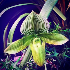 IMG_4825 (sosparkly) Tags: instagram nature trees plants paris england edinburgh florida bermuda beach whimsy