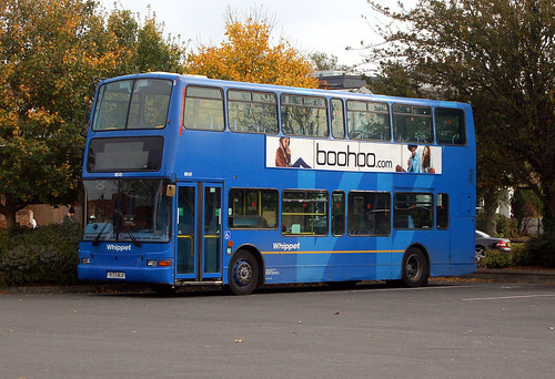 cambs - whippet wd411 huntingdon 03-11-16 JL