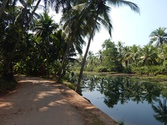 Villages Near Calicut Kerala Photography By CHINMAYA M (7)