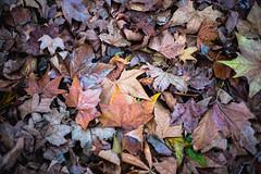 Autumn (Jordi Corbilla Photography) Tags: autumn background desktop leaves brown fall nikon d750 jordicorbilla jordicorbillaphotography london park