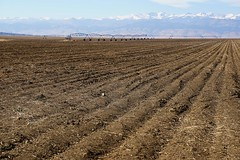 Rows (Let Ideas Compete) Tags: furrows farmland plowed pivot sprinkler pivotsprinkler dirt fertile soil rich