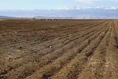 Rows (Let Ideas Compete) Tags: furrows farmland plowed pivot sprinkler pivotsprinkler dirt fertile soil rich circlepivot