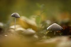 ... Un pequeo mundo ... (Device66) Tags: fungi world setas campo mushroom warm onthefloor laying nikon device misprimerassetas