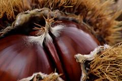 Chestnuts (Beatriz-c) Tags: chestnuts castañas autum otoño golden dorado nature naturaleza food comida
