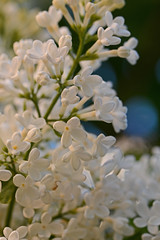 2015 06 05_d7100_0008 (swedgatch (Missing my Father)) Tags: swedgatch sweden spring stockholm nikon nature d7100 tamron tiny things naked light life love little lens tele tullip take 90mm macro color colors capture photography photograph photo photographs photos photographer perspective prime beautiful by beauty dof flowers flower art artistic angle