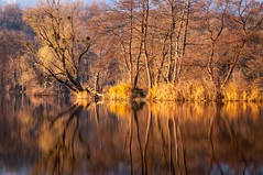 Shine a light (Pierrotg2g) Tags: nature paysage landscape savoie lac lake eau water reflet reflection nikon d90