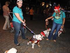 Fotos do Desfile Pet do Magia de #Natal em #Blumenau que aconteceu neste domingo na frente da Vila Germânica. Muitos cachorros no desfile PET. Fotos #BlogdoJaime.