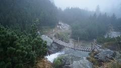 Punte peste valea paraului Pietrele (Sorin Sfrlogea) Tags: retezat montaniard
