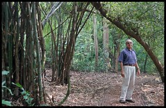 Nice path through forest @  Maharashtra Nature Park (Indianature14) Tags: india nature forest october bombay maharashtra mumbai 2015 cityforest mmrda indianature mahimnaturepark maharashtranaturepark mumbaiforest