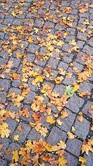 Autum in Tallinn. (kiccie) Tags: grey leaf colours autum bildekritikk
