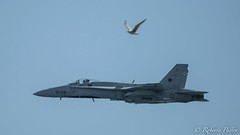 EF-18 Hornet (robertopastor) Tags: españa nikon hornet es aviones d800 aviación cámaras sanjavier santiagodelaribera regióndemurcia ef18 robertopastor tamron150600 30aniversariopatrullaáguila