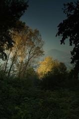 poplar trees in early autumn (antonyshaw) Tags: autumn tree art polaroid poplar afternoon pentax sigma filter nd g2 polarizer grad cokin k5iis 1835f18