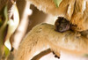 LEMUR-PARK-78 (RAFFI YOUREDJIAN PHOTOGRAPHY) Tags: park city travel trees plants baby white cute green animal fauna canon river jumping sweet turtle wildlife bricks mother adorable adventure explore lemur 5d lemurs bushes madagascar 70200 antananarivo mkiii