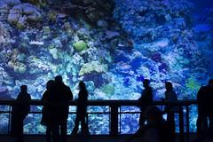 ... bin mal abgetaucht (Helmut44) Tags: panorama nature water germany deutschland leipzig menschen fisch sachsen australien blau greatbarrierreef kunstwerk workofart korallenriff unterwasserwelt asisi panometer rundbild