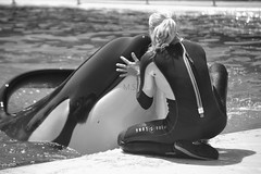 Complicity [1996 - 2015 ] (Photographie Sabrina Martins.) Tags: en baby white angel big nikon noir peace kim ange rip trainers val ii killer rest whale whit orca moment 06 et valentin blanc antibes repose marineland freya orcas paix biot in blanck magique orque orques soigneur d3100