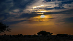 Sun Set (shinnawi90) Tags: sunset sky sun tree art weather amazing nice shot desert national arab oman gradual