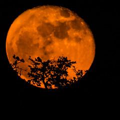 FullMoon_11_15_2016 049 (VinceFL) Tags: fullmoon lighthouse luna lunar manfrottotripod moon nature nikond7100 nikonmll3 outdoors saintsimonsislandga sky southern sunset tamron70300mmf456dild12autofocusmacro vincefl