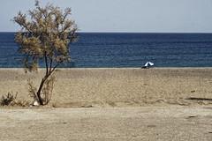 (p$ychoboyJ@ck) Tags: sea tree beach umbrella greek seaside desert greece grecia albero ombrelloni spiaggia rodi ombrellone deserta rodhos rodhes