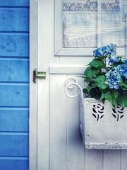door flowers blue window smartphone (Photo: suzanne~ on Flickr)