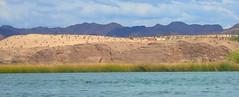 PA194494.jpg (DrPKHouse) Tags: arizona unitedstates loco lakehavasucity chemehuevi