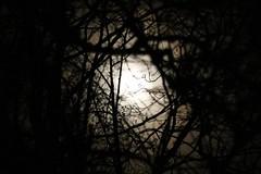 full moon................ (Suzie Noble) Tags: trees moon tree garden fullmoon moonrising strathglass struy