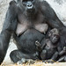 Mom+and+Baby+Gorilla+Posed