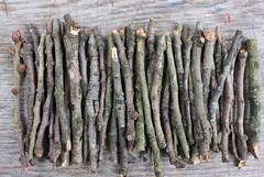 Twigs. Sticks. Oaks. Exfoliation. Shreveport. (trudeau) Tags: art design sticks oak environmental symmetry twigs