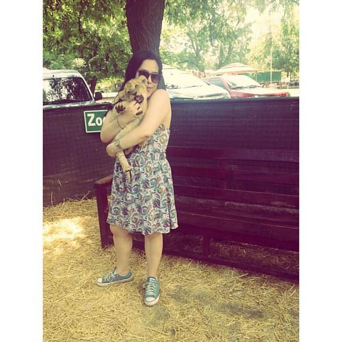 Me como al bebe 😻#Leon #lion #zooluján