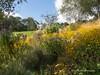 Clyne Gardens 2016 09 30 #25 (Gareth Lovering Photography 3,000,594 views.) Tags: clyne gardens botanical swansea wales flowers trees shrubs park olympus stylus1s garethloveringphotography