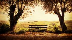 Le Langhe ... (Augusta Onida) Tags: langhe piemonte italia italy panchina bench albero tree panorama landscape sunset unesco patrimonio heritage