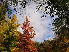 Udazken Koloretan/Los colores de otoo (nora4santamaria) Tags: otoo euskalherria vitoriagasteiz araba euskadi automne